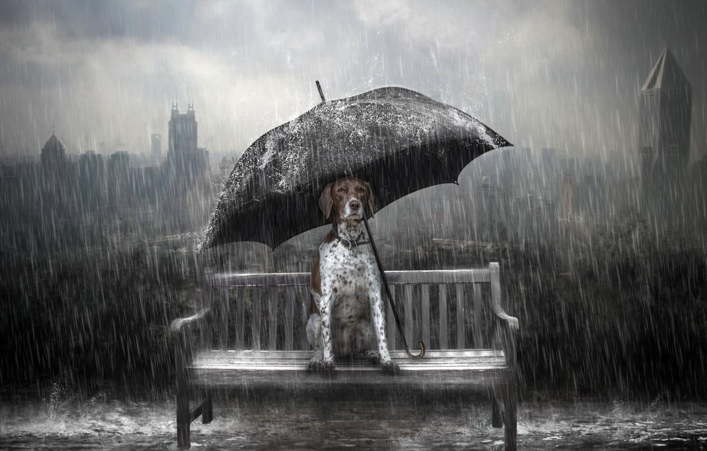 Фото обои дождь, собака, зонт, скамья