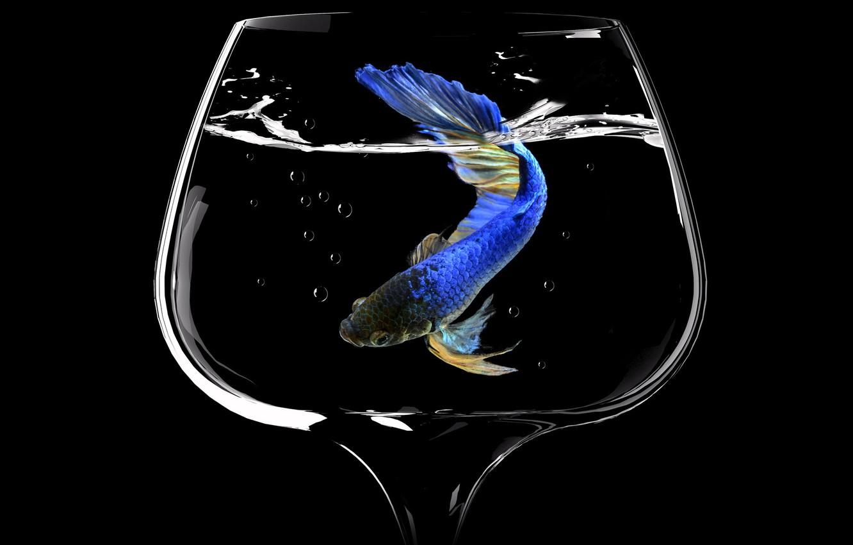 Фото обои пузыри, бокал, рыба, glass, bubbles, fish