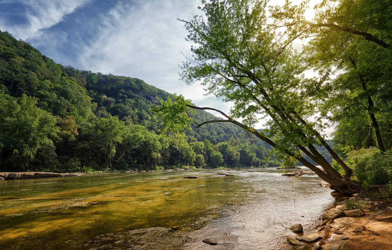 Фото обои лес, лето, деревья, природа, река, берег, склон