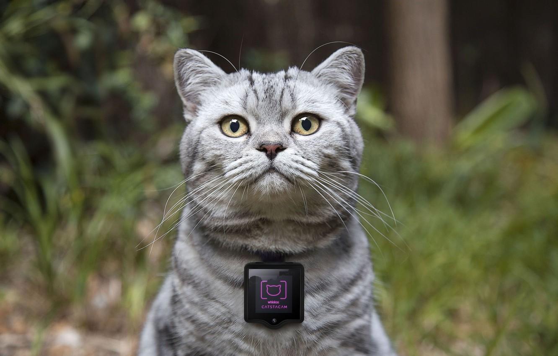 Фото обои concept, device, камера для котов, Whiskas, cat cameras, Catstacam, гаджеты для кошек, Вискас