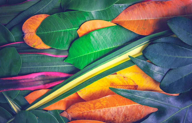 Фото обои осень, листья, фон, colorful, texture, background, autumn, leaves