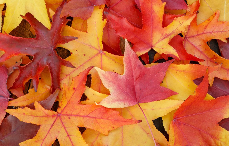 Фото обои осень, листья, фон, colorful, клен, background, autumn, leaves, осенние, maple