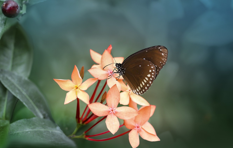 Фото обои листья, макро, природа, бабочка, ветка, насекомое, цветки