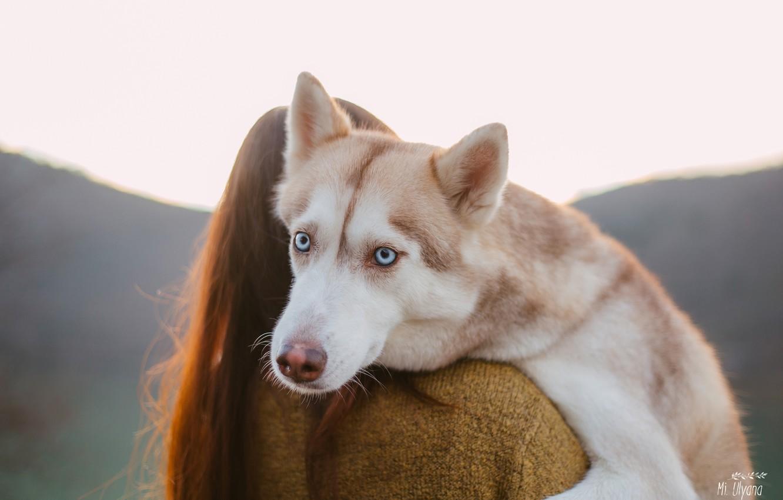 Фото обои взгляд, морда, девушка, собака, голубые глаза, хаски, Ульяна Мизинова