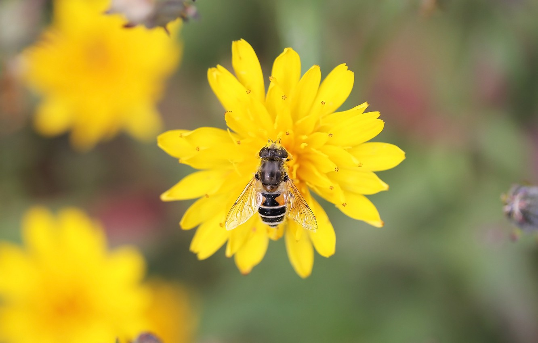 Фото обои цветок, муха, фон, пыльца