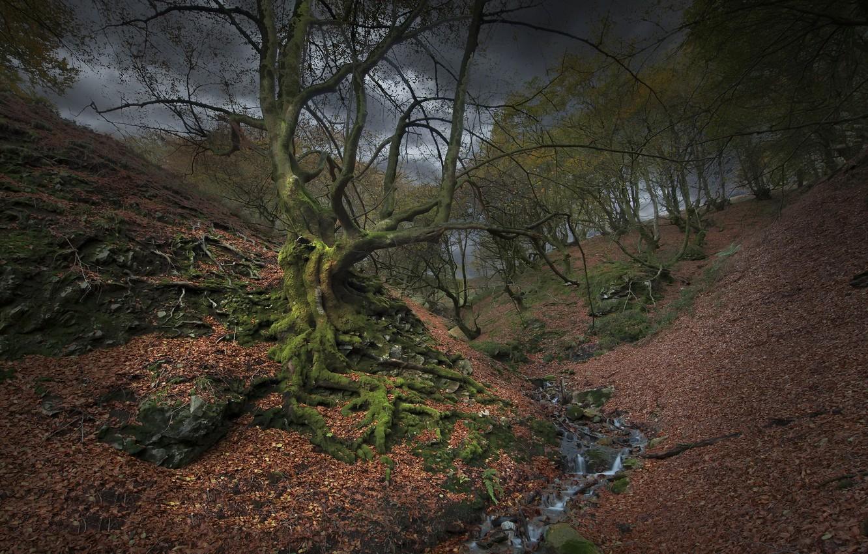 Фото обои природа, дерево, речка