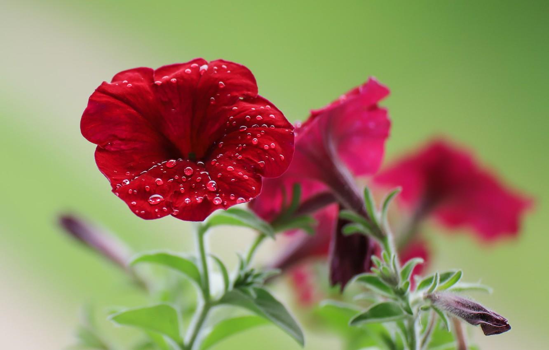 Фото обои цветы, роса, боке