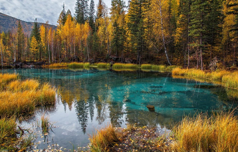 Фото обои осень, лес, листья, деревья, природа, озеро, отражение, Алтай