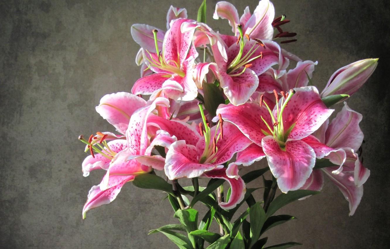 лишь художественные фото цветы лилии смеюсь, рыдаю