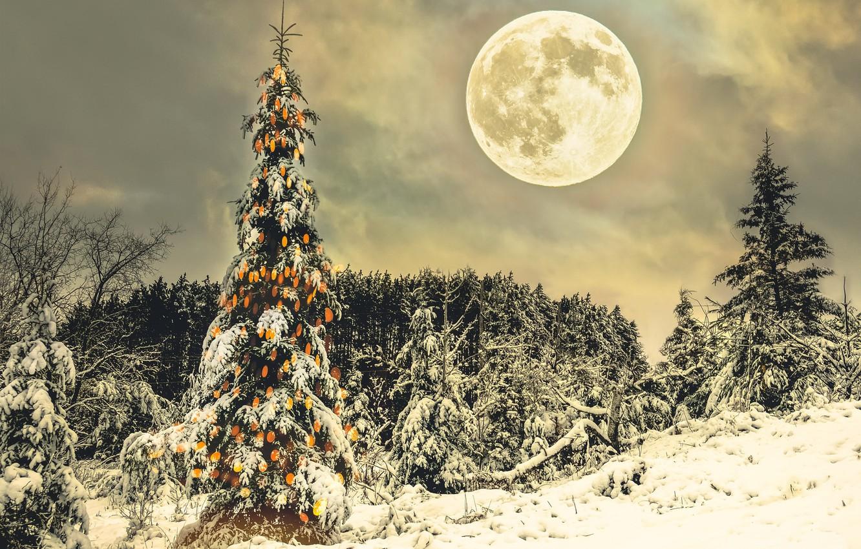 Фото обои зима, ночь, праздник, луна, ёлка
