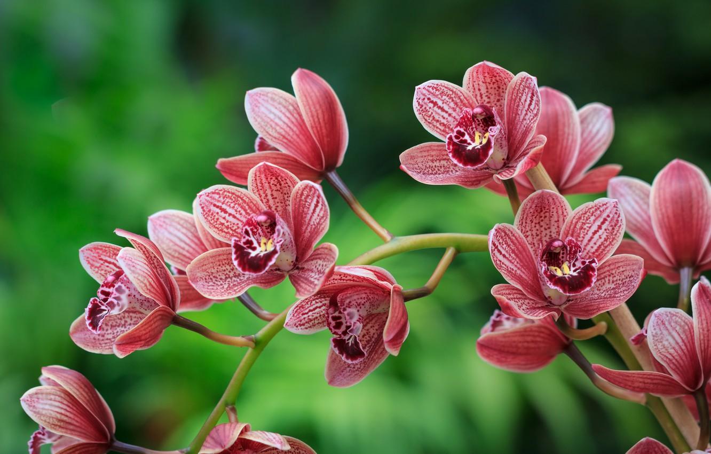 Фото обои природа, ветка, орхидея, цветки