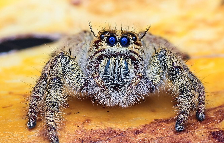 Обои насекомое, паук, лист. Макро foto 8