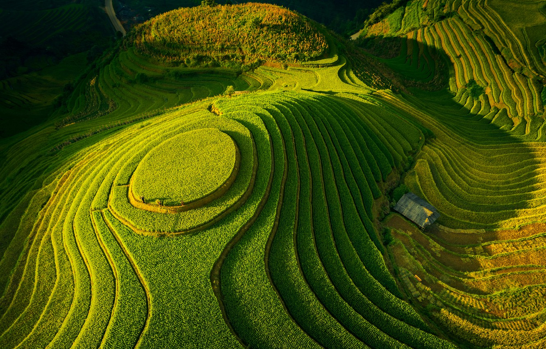 Фото обои зелень, поля, долина, террасы, fields, valley, greens, Tuấn Vũ