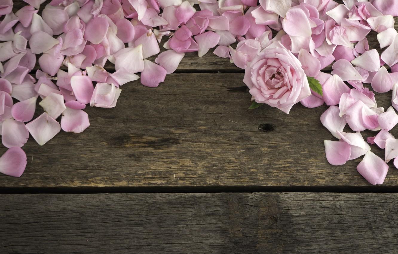 Фото обои цветы, розы, лепестки, розовые, wood, pink, flowers, petals, roses