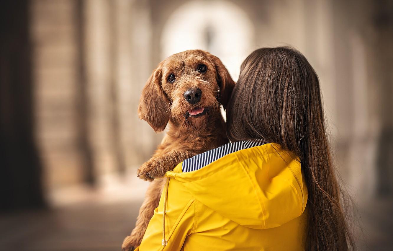 Фото обои друг, человек, собака