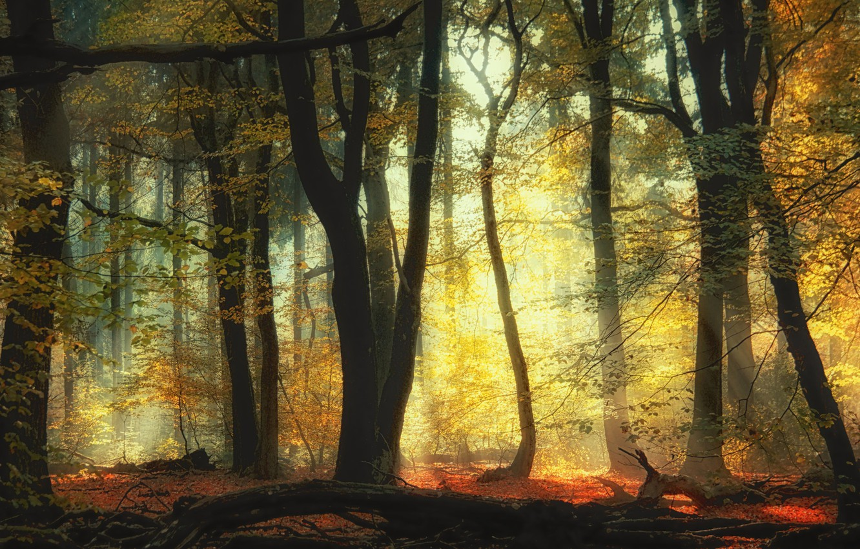 Фото обои осень, лес, деревья, forest, trees, autumn, Saskia Dingemans