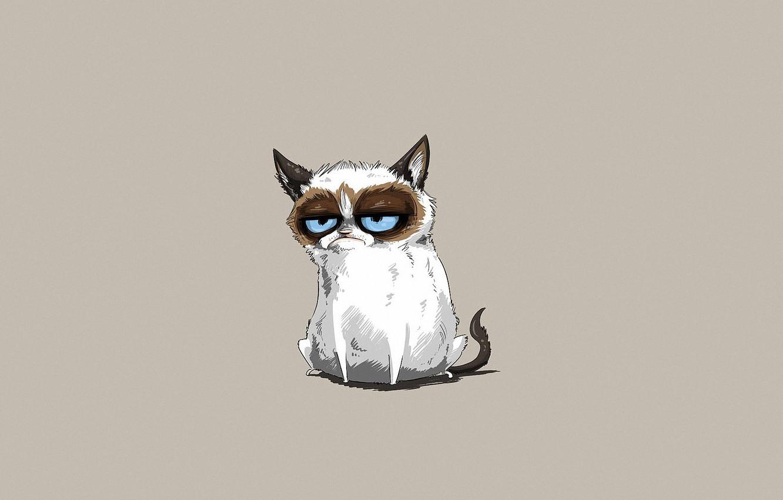 Фото обои морда, серый фон, котяра, голубоглазый, злобный взгляд