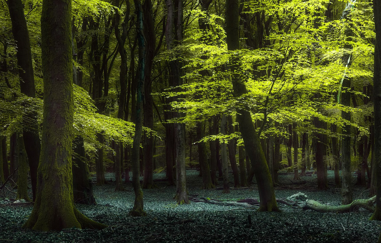 Фото обои лес, лето, природа