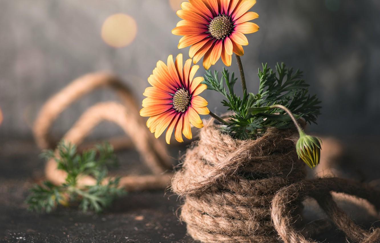 Фото обои листья, цветы, бутон, верёвка, ножницы, боке