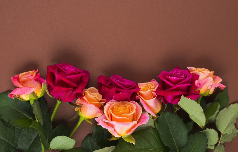 Фото обои цветы, розы, желтые, розовые, бутоны, yellow, pink, flowers, romantic, roses, cute