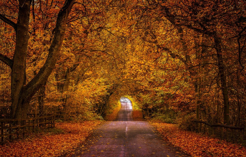 рассказал осенние аллеи в лесах и парках картинки магнитик нашим фото