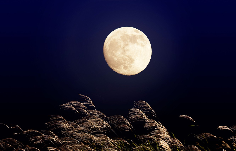 Лунные вечера картинки