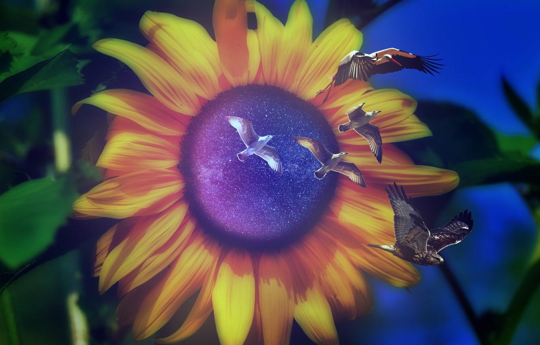 Фото обои листья, звезды, фотошоп, чайки, подсолнух, портал, боке, космоc