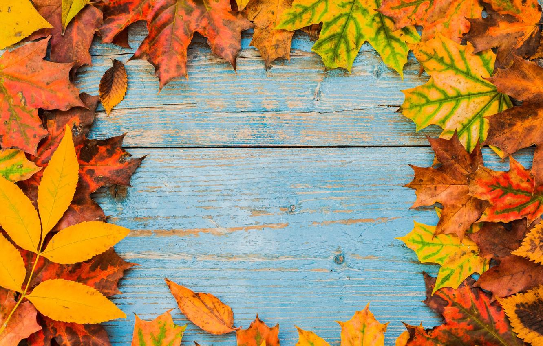Фото обои осень, листья, фон, доски, colorful, клен, wood, autumn, leaves, frame, maple
