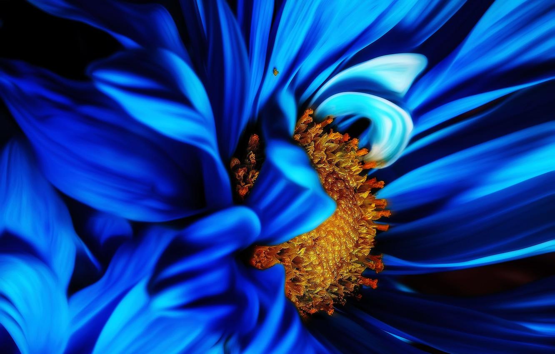 Фото обои flower, nature, blue, plant, Macro, bloom