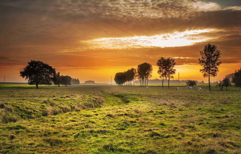 Фото обои небо, деревья, рассвет, коровы, луг