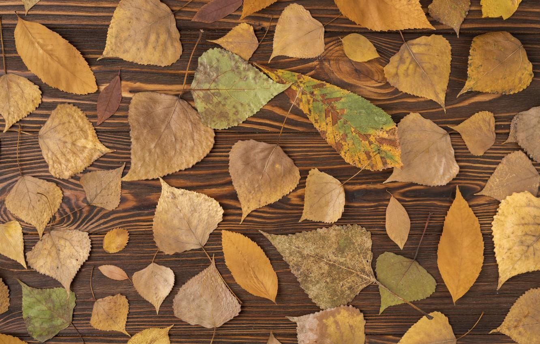 Фото обои осень, листья, фон, дерево, colorful, wood, background, autumn, leaves, осенние