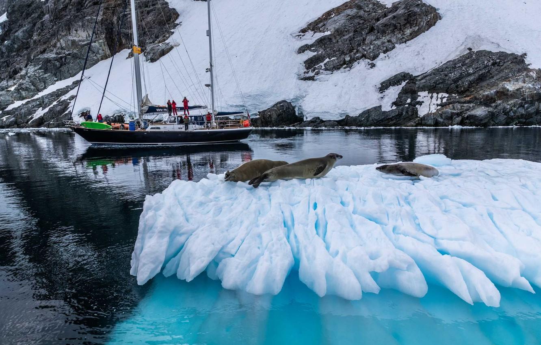 Фото обои зима, море, животные, снег, природа, люди, яхта, льдина, тюлени, Александр Лозицкий
