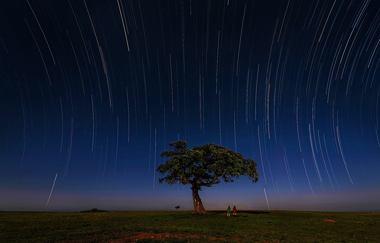 Фото обои звезды, дерево, зебра, саванна, экватор, stars, tree, zebra, Кения, savannah, Kenya, масаи, Hua Zhu, Masai, …