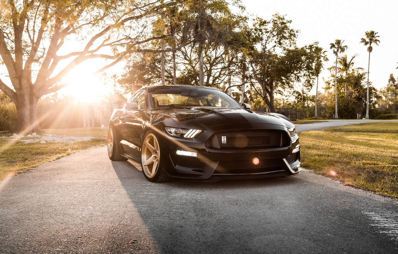 Фото обои Mustang, Ford, Shelby, GT350, Ford Mustang Shelby GT350