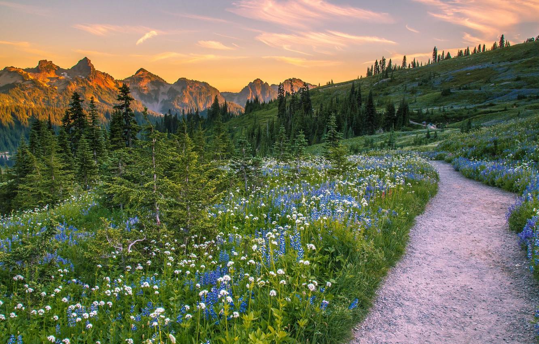 Фото обои деревья, пейзаж, цветы, горы, природа, США, травы, тропинка, луга, национальный парк, National Park, Mount Rainier, …