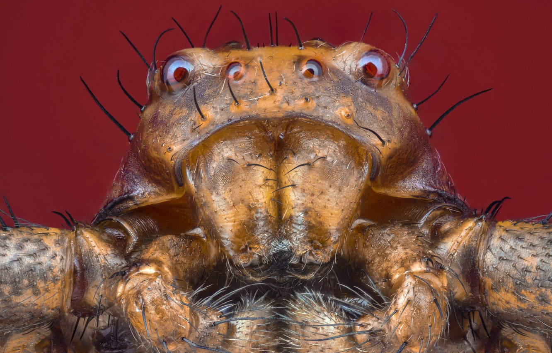 Фото обои макро, природа, паук