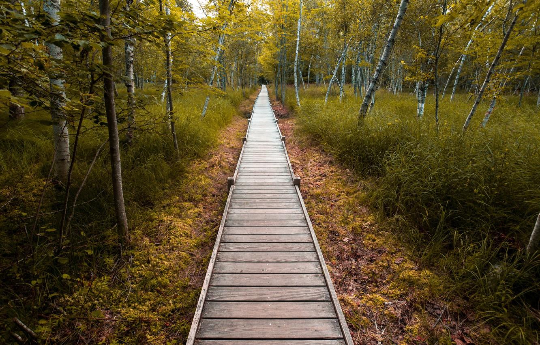 Фото обои дорога, природа, парк