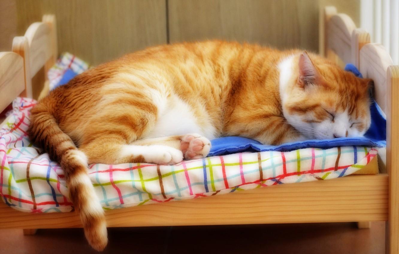 Днем рождения, картинки кошки спят в кроватках