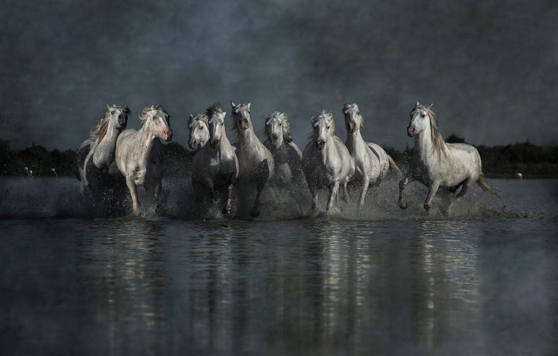 Фото обои небо, вода, свет, брызги, отражение, пасмурно, берег, кони, группа, вечер, лошади, бег, белые, компания, сумерки, ...
