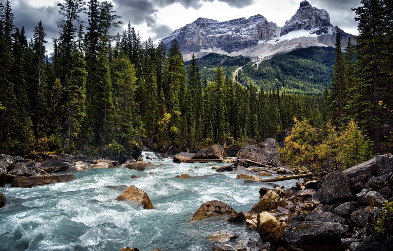 словам потерпевших, фото высокое качество река горная лес считают, что детей
