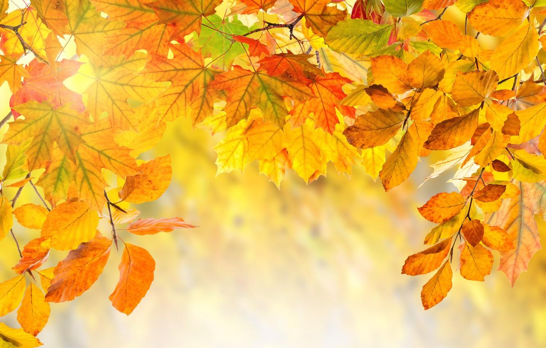 Фото обои осень, листья, colorful, background, autumn, leaves, осенние