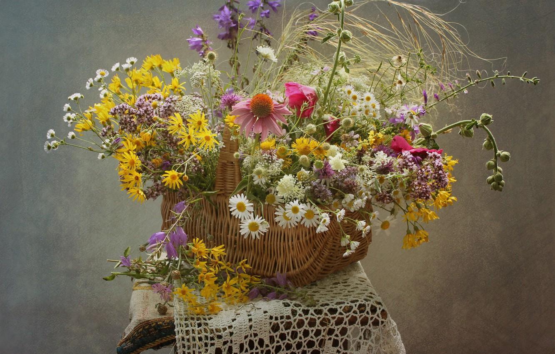 Фото обои лето, корзина, ромашки, полевые