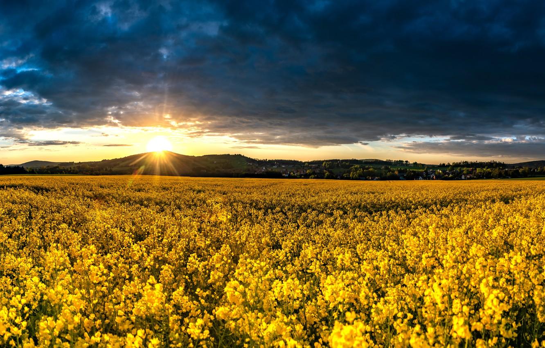 Фото обои поле, небо, закат, тучи, Германия, Germany, рапс, Саксония, Saxony, Верхняя Лужица, Upper Lusatia