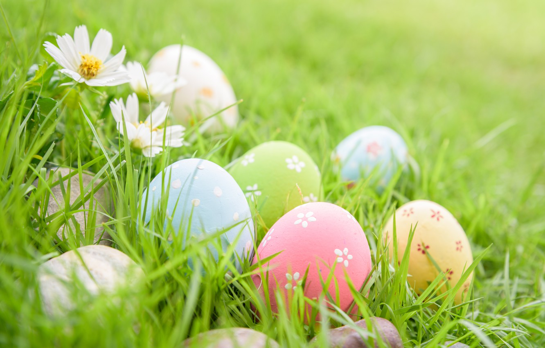 Фото обои трава, цветы, яйца, Пасха, happy, flowers, eggs, easter, decoration