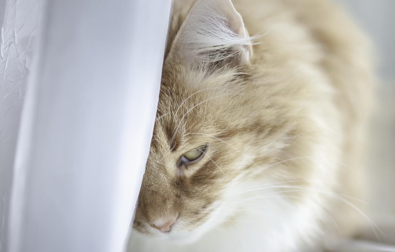 Фото обои кошка, уют, дом