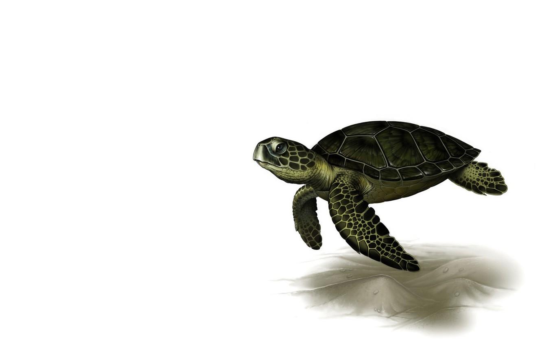 Фото обои рендеринг, черепаха, арт, Leslie Casilli, Sea Turtle