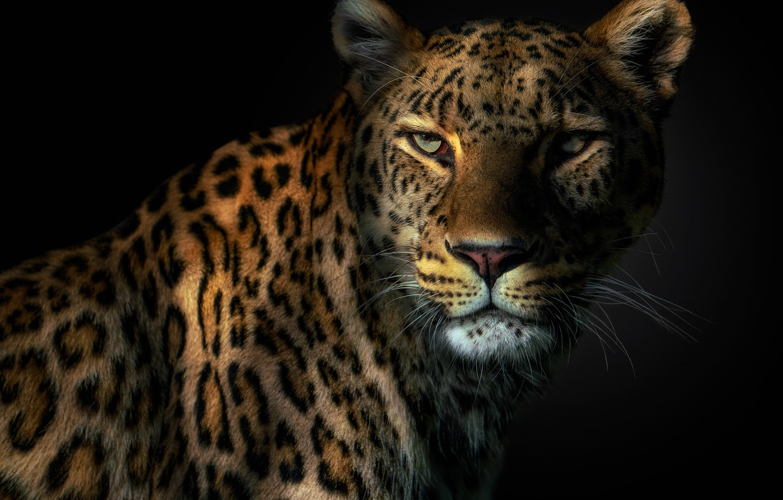 Фото обои глаза, леопард, клыки, leopard, eyes, fangs, Pedro Jarque