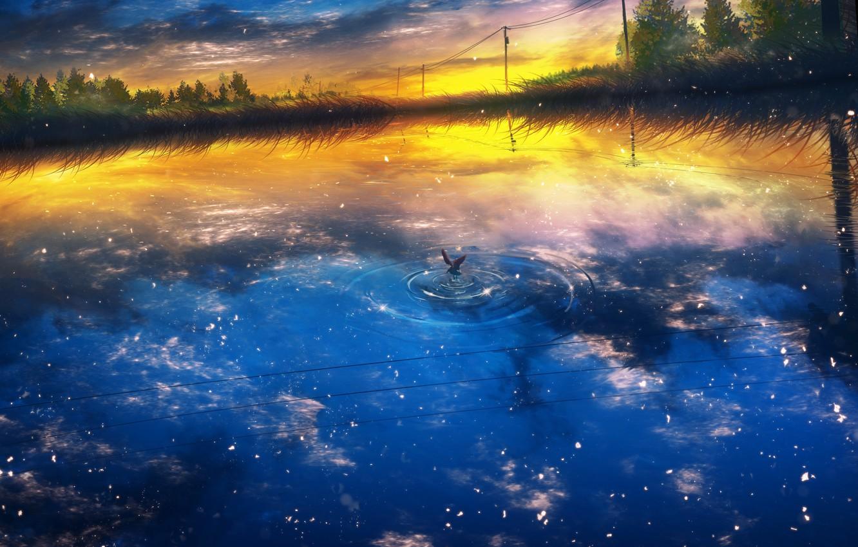 Фото обои вода, закат, природа, чайка, by Y_Y