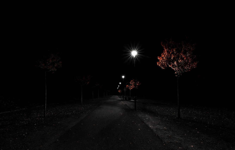 Фото обои ночь, природа, парк