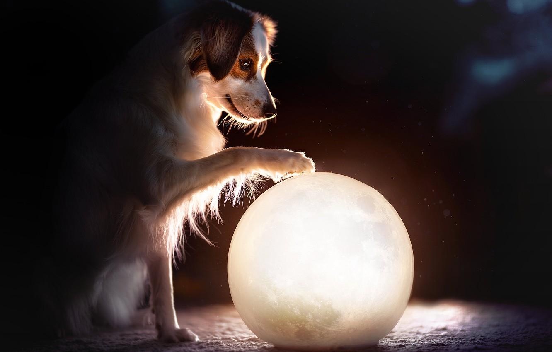 психолога отмечают картинки про шарика собаку два как